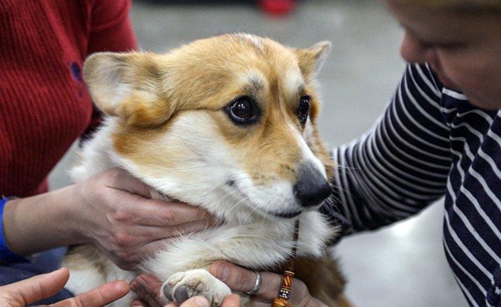 """25-я выставка собак """"Евразия"""""""