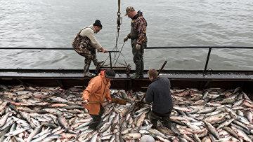 Производство рыболовецкого колхоза в России