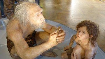 Неандертальцы в Музее естественной истории в Вене, Австрия