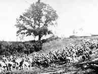 Первая конная армия в походе во время войны с белополяками. 1920 год