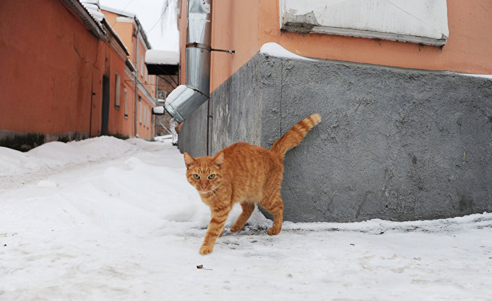 Кот на улице Рыбинска