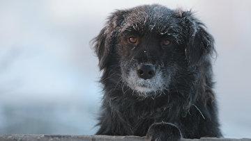 Сильные морозы в регионах России