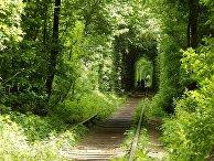 Тоннель любви возле поселка Клевань на Украине
