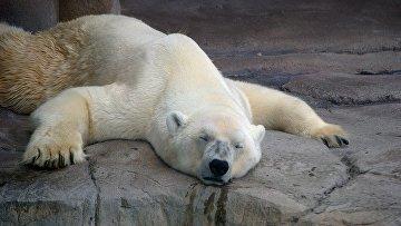 Белый медведь в зоопарке Токио, Япония