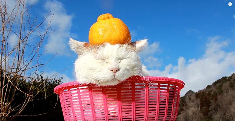 Cамый известный японский кот, познавший дзен
