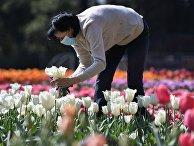 """""""Парад тюльпанов"""" в Никитском ботаническом саду в период самоизоляции"""
