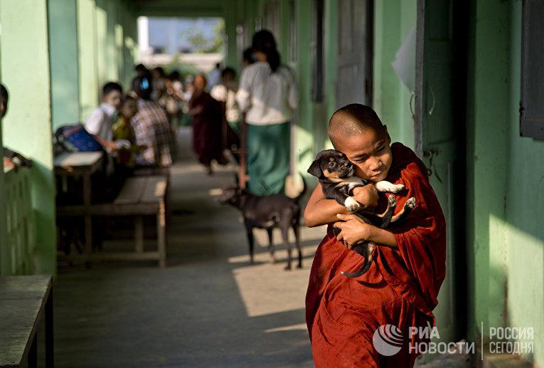 Буддийский монах-послушник со щенком в пригороде Янгона, Мьянма