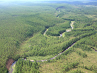 Тайга в районе падения Тунгусского метеорита
