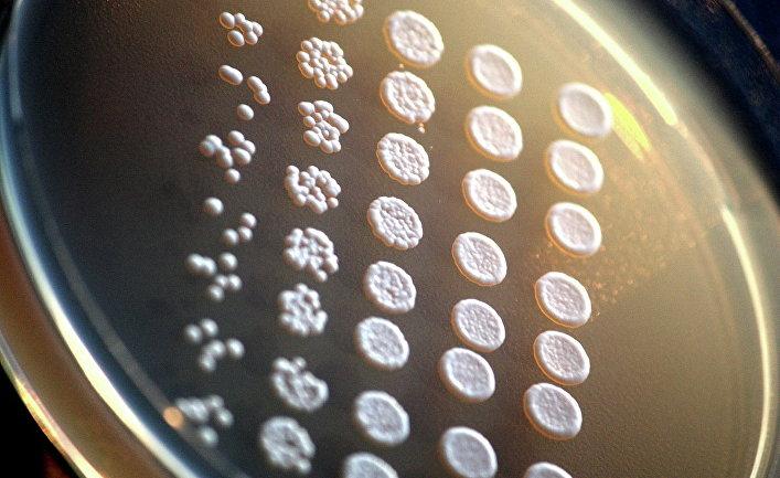 Культуры дрожжей с пересаженными человеческими генами