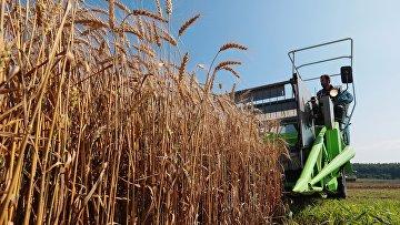 Демонстрация научных разработок по выращиванию пшеницы
