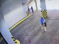 Видео ограбления 85-летней женщины