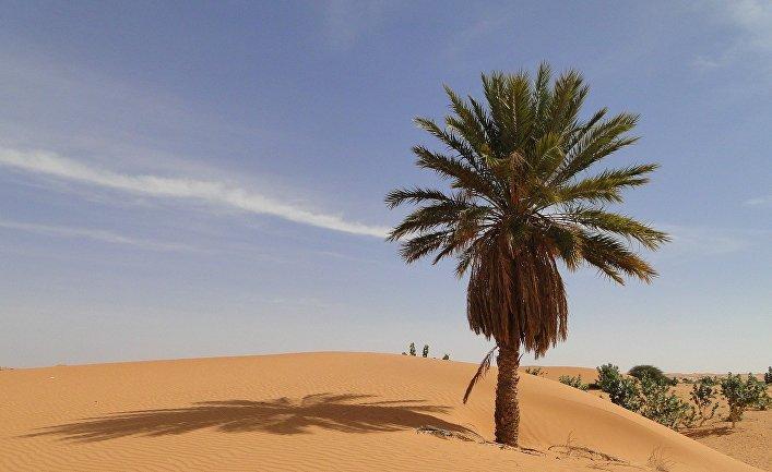 Пальма в пустыне