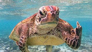 Финалисты конкурса забавных фотографий дикой природы