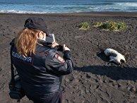 Полиция проверяет информацию о загрязнении воды и гибели морских животных на Камчатке