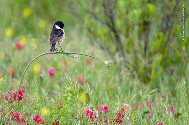 Лучшие фотографии дикой природы 2020