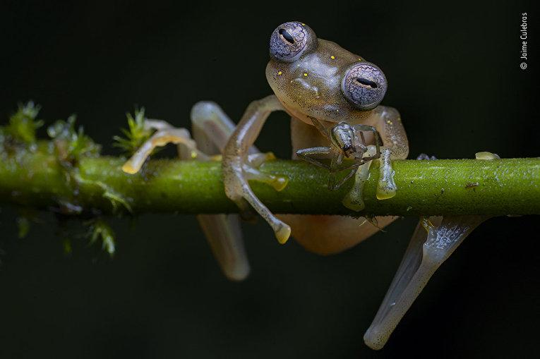 Лучшие фотографии конкурса Wildlife Photographer of the Year