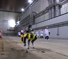 Робот Boston Dynamics на ЧАЕС