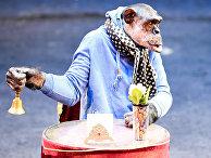 Репетиция в Большом Московском цирке