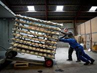 Сотрудники норковой фермы в Дании уничтожают животных из-за заражения коронавирусом