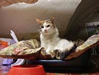 Кот в подвале Эрмитажа