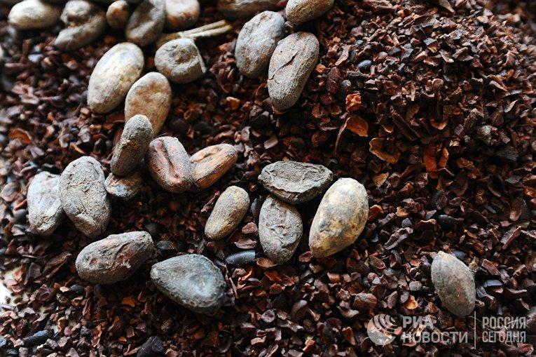 "Производство ремесленного шоколада ""MaRussia"" в Тамбове"