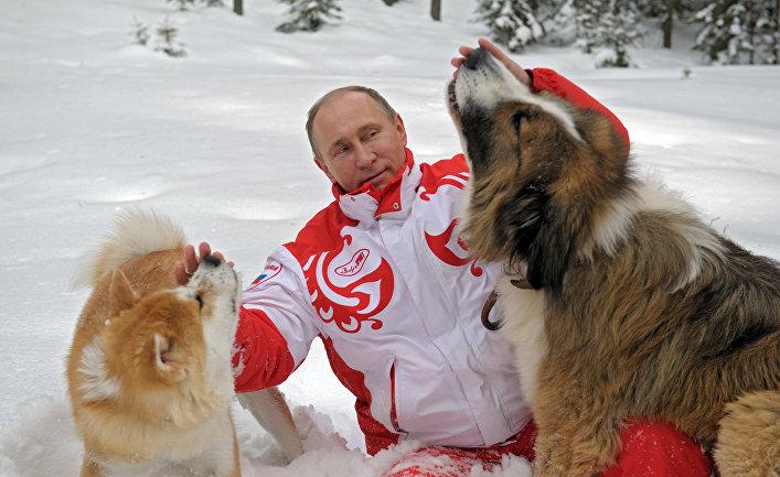 Прогулка В.Путина с собаками в Московской области