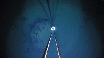 Под шельфовым ледником в Антарктике обнаружили неизвестных животных