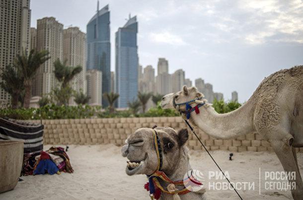 Вид на район Дубай-Марина