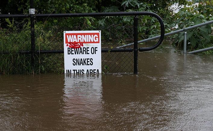 Знак «Осторожно, змеи» вовремя наводнения вСиднее, Австралия