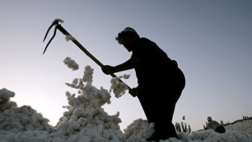Рабочий собирает хлопок в Синьцзяно-Уйгурском автономном регионе, Китай