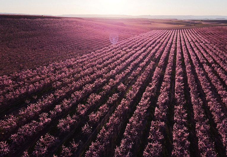 Цветение персиковых деревьев в Айтоне, Испания