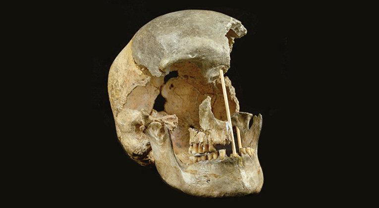 Череп современного человека из пещеры Златы Кун, Чехия