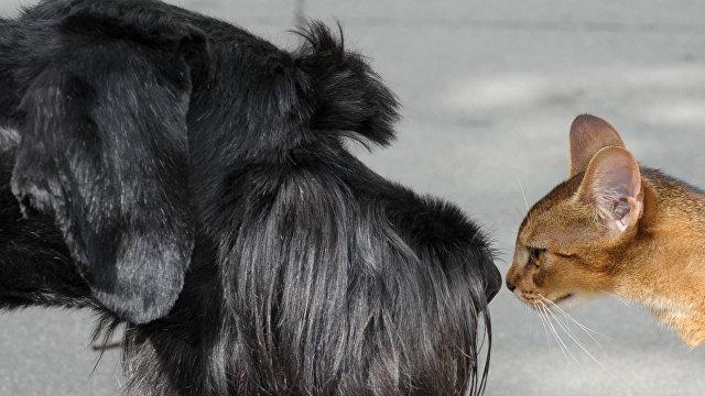 Videnskab (Дания): кто умнее  кошки или собаки