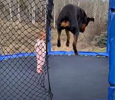 Ребенок и собака веселятся на батуте