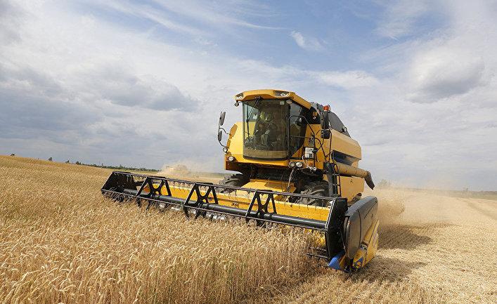 Сбор урожая пшеницы возле села Красное в Черниговской области, Украина