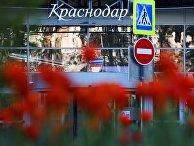 Весеннее цветение растений в Краснодаре