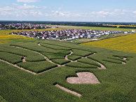 Герб Украины на кукурузном поле недалеко от Киева