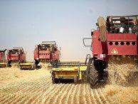 Уборка урожая пшеницы в Волгоградской области