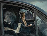 Медвель, который ездит с водителем
