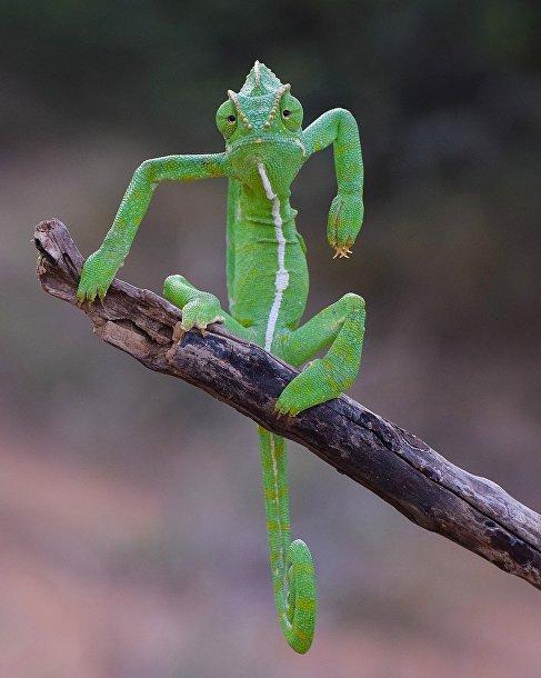 Зеленый стилист